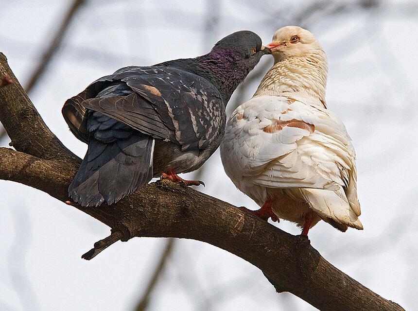 blyad-golubi-tseluyutsya-na-krishe-toshey